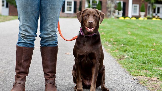 Portare il cane al guinzaglio fabulous cane tira al - Quando fare il primo bagno al cane ...