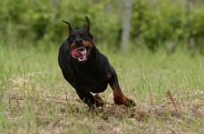 addestramento cani da guardia