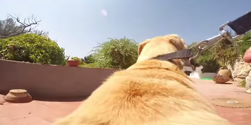 video cane labrador acqua gopro